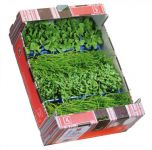 Sea-Cress-Mix.jpg